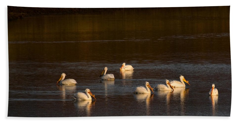 Yellowstone Hand Towel featuring the photograph American White Pelicans by Steve Stuller