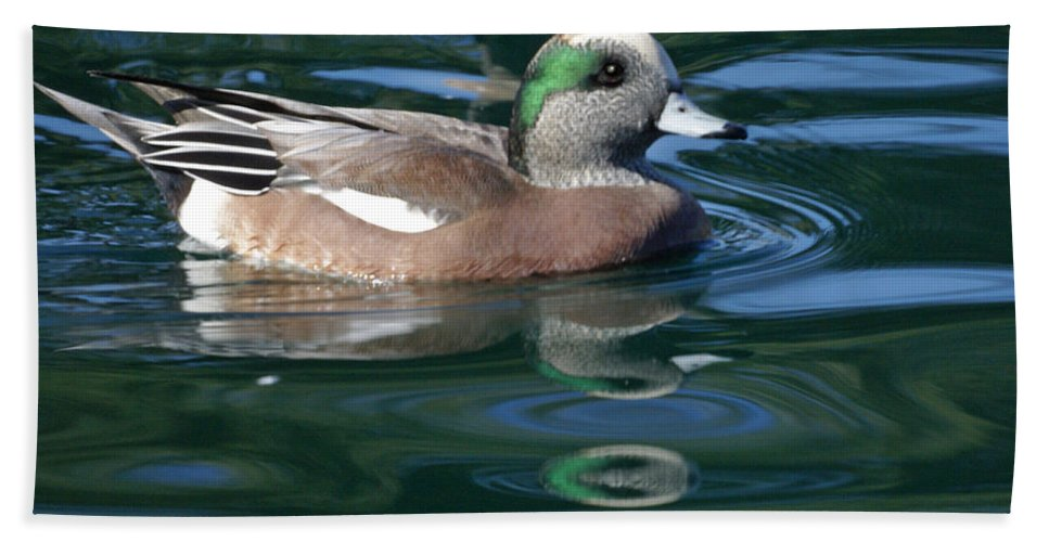 American Widgeon Hand Towel featuring the photograph American Widgeon Duck by Heather Coen