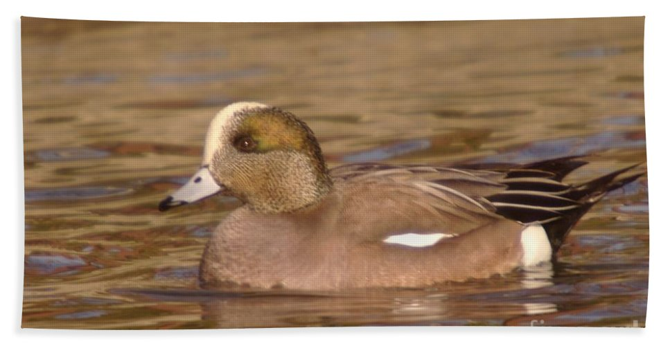 Ducks Hand Towel featuring the photograph American Wigeon by Jeff Swan