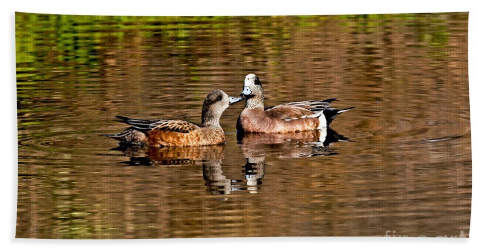 Fauna Hand Towel featuring the photograph American Wigeon Pair Together by Anthony Mercieca