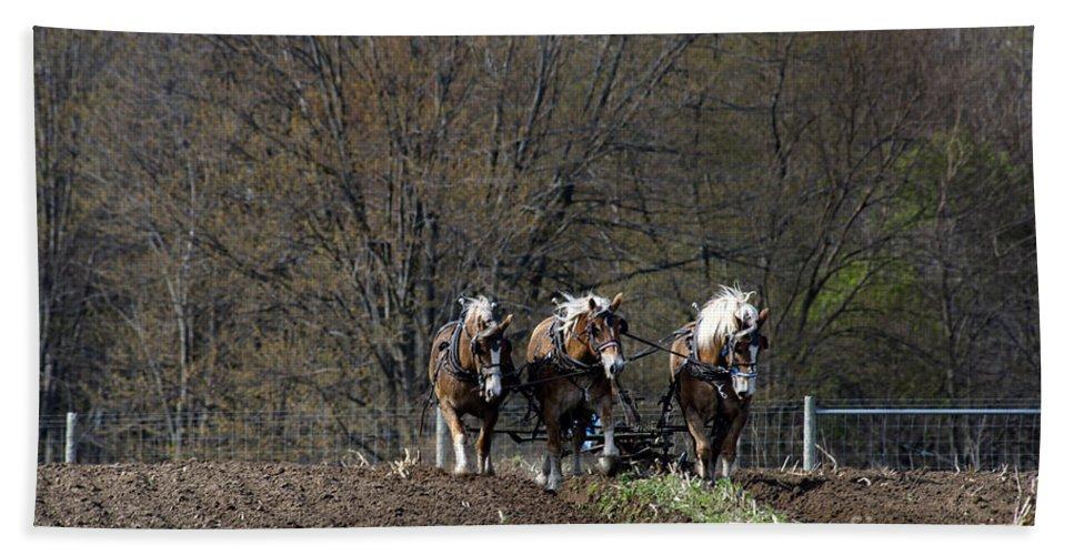 Amish Bath Sheet featuring the photograph Amish Horses At Work by David Arment