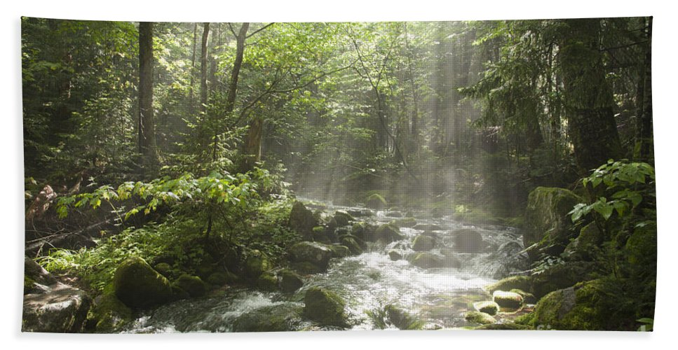 New England Bath Sheet featuring the photograph Ammonoosuc Ravine Trail - White Mountains Nh Usa by Erin Paul Donovan