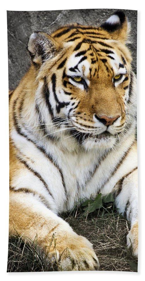 3scape Photos Bath Towel featuring the photograph Amur Tiger by Adam Romanowicz