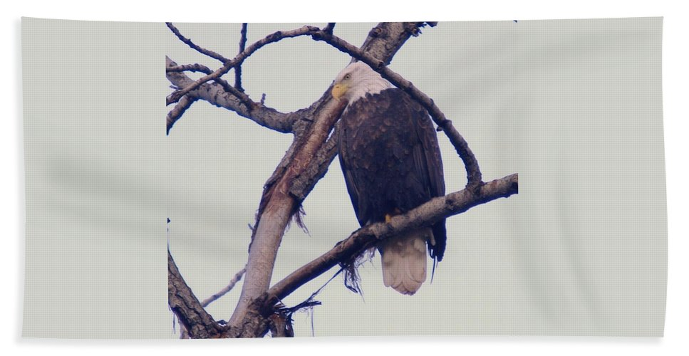 Eagles Hand Towel featuring the photograph An Eagle Resting by Jeff Swan