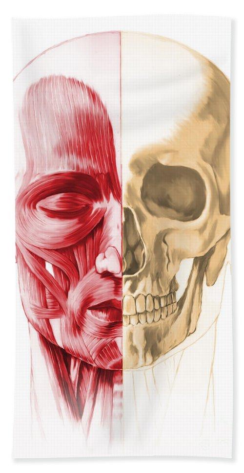 Anatomy Bath Sheet featuring the digital art Anatomy Of A Male Human Head, With Half by Leonello Calvetti