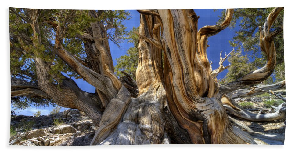 Tree Hand Towel featuring the photograph Ancient Bristlecone by Dianne Phelps