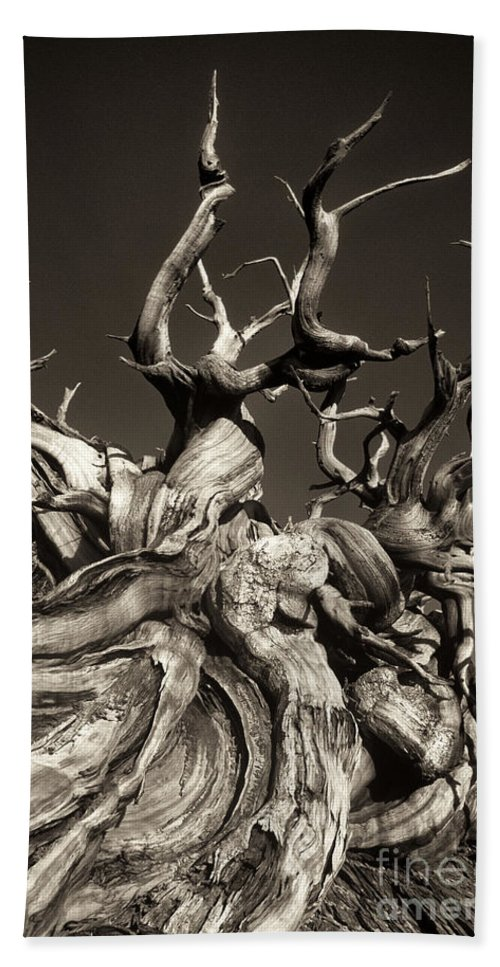 American Hand Towel featuring the photograph Ancient Bristlecone Pine In Black And White by Dave Welling