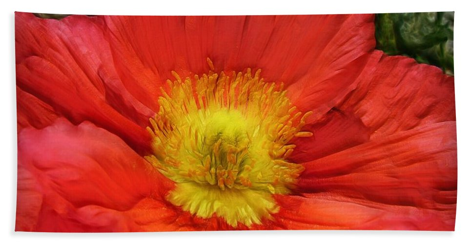 Flowers Hand Towel featuring the photograph Ancient Flower 4 - Poppy by Lilia D
