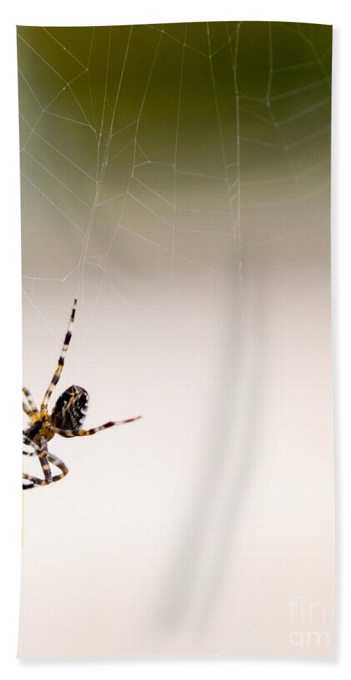 Arachnid Hand Towel featuring the photograph And Away We Go. by Tracy Knauer