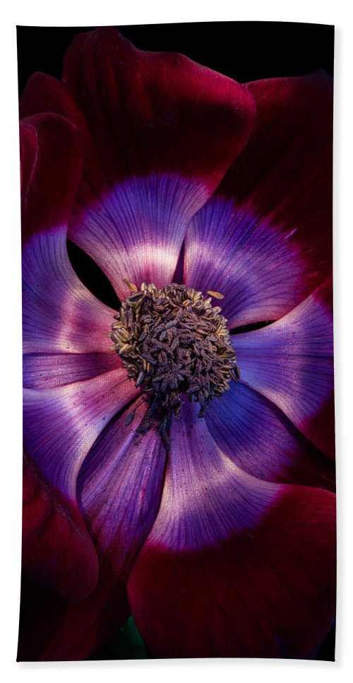 Anemone Bath Sheet featuring the photograph Anemone by Ann Garrett