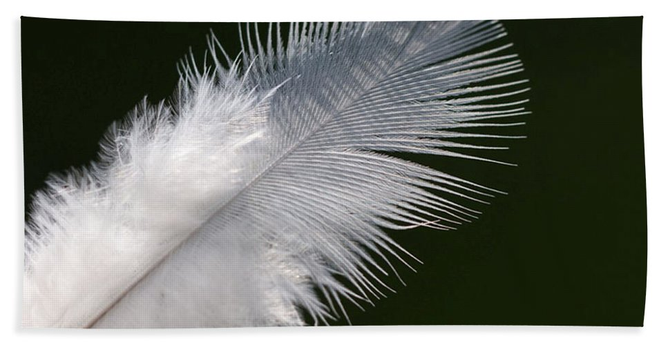 Angel Hand Towel featuring the photograph Angel Feather by Carol Lynch