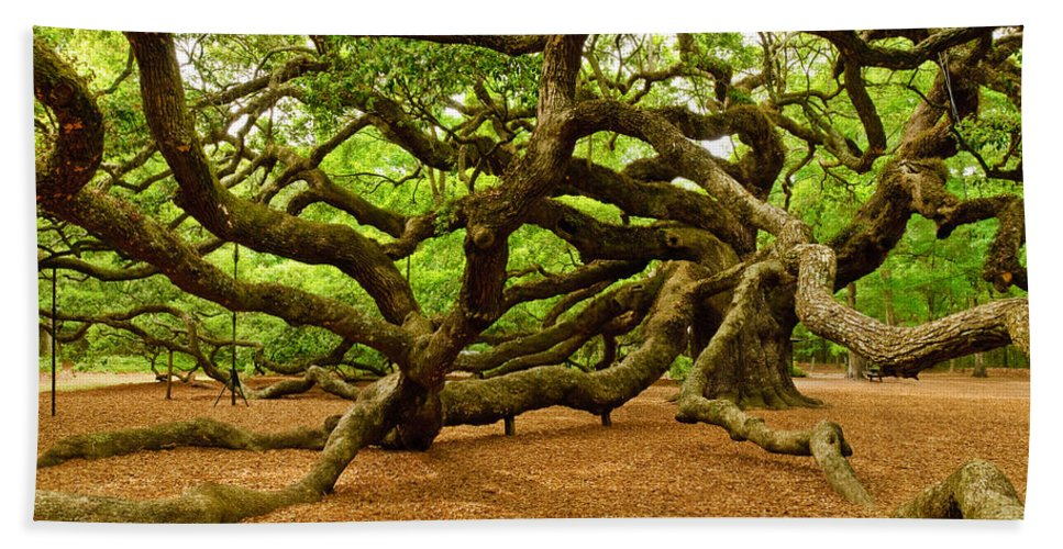 Nature Hand Towel featuring the photograph Angel Oak Tree Branches by Louis Dallara