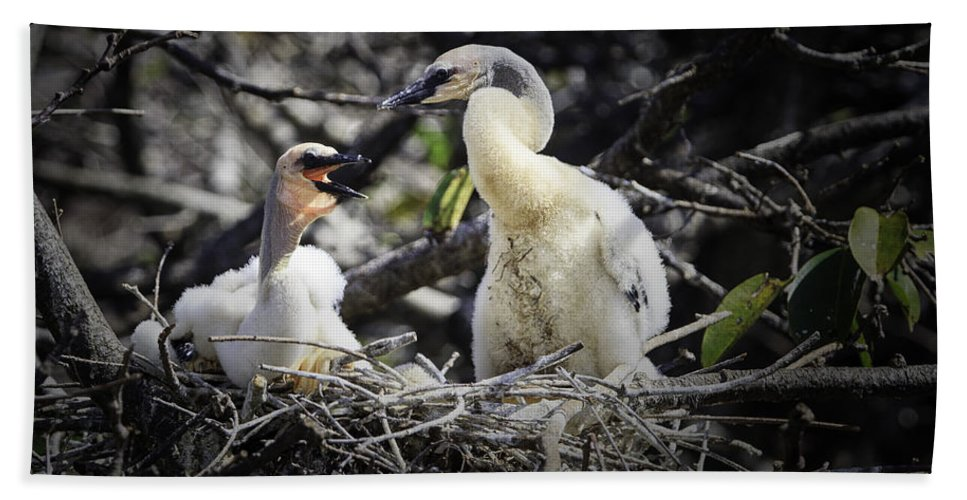 Anhinga Hand Towel featuring the photograph Anhinga Chicks by Fran Gallogly
