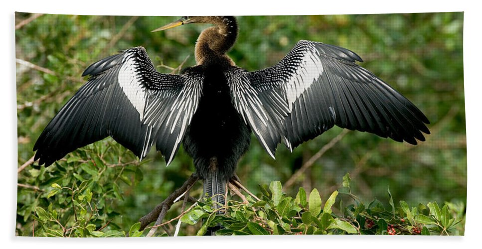 Animal Hand Towel featuring the photograph Anhinga Sunning by Anthony Mercieca