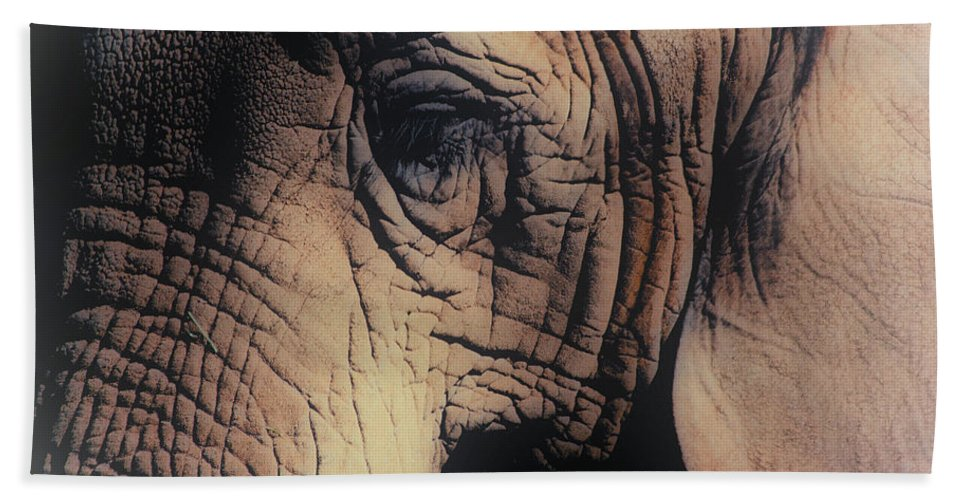 Elephant Hand Towel featuring the photograph Animals Wrinkle Too by Karol Livote