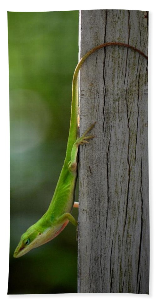 Anole Bath Sheet featuring the photograph Anole by Maria Urso
