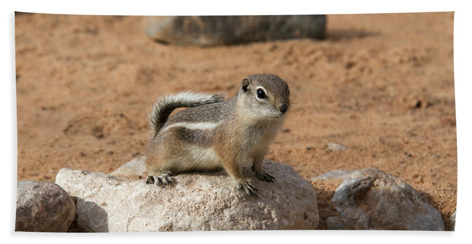 Antelope Ground Squirrel Hand Towel featuring the photograph Antelope Ground Squirrel by Debby Richards