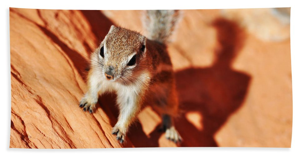 Antelope Ground Squirrel Hand Towel featuring the photograph Antelope Ground Squirrel by Kyle Hanson