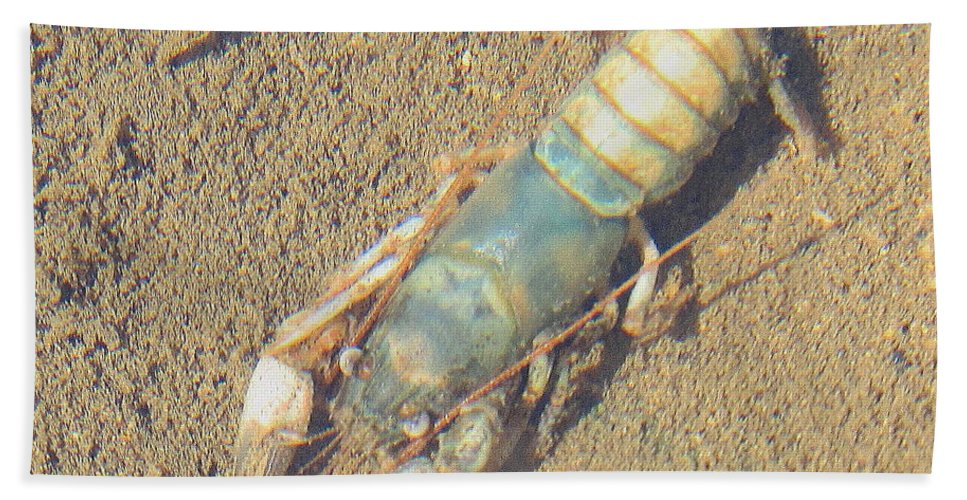 Appalachian Blue Crayfish Images Appalachian Crustaceans Blue Crustaceans North American Fresh Water Crustaceans Appalachian Aquatic Creatures Appalachian Stream Life Freshwater Biodiversity Rare Species Endangered Species Endangered Ecosystems Pennsylvania Biodiversity Pennsylvania Wildlife Appalachian Biodiversity River Water Quality Natural Design In Nature Forest Streams Appalachian Crawfish Appalachian Streams North American Freshwater Rivers Natural Science Hydrology Blue Crawdad Bath Sheet featuring the photograph Appalachian Blue Crayfish by Joshua Bales