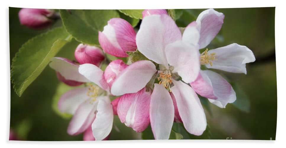 Apple Blossom Hand Towel featuring the photograph Apple Blossom by Ann Garrett