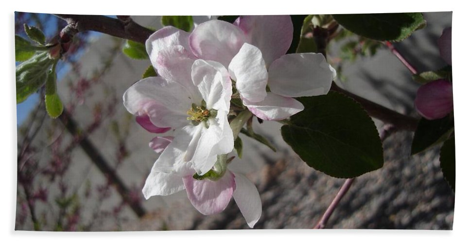 Flowers Bath Sheet featuring the photograph Apple Blossoms 3 by Lovina Wright