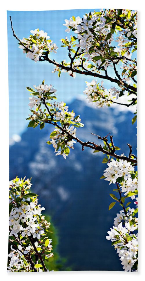 Apple Hand Towel featuring the photograph Apple Blossoms Frame The Rockies by Lisa Knechtel