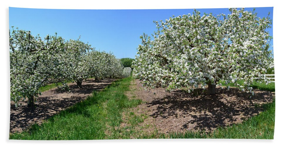 Spring Hand Towel featuring the photograph Apple Blossoms by Michelle Calkins