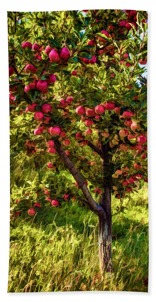 Apple Hand Towel featuring the photograph Apple Orchard II by Diana Powell