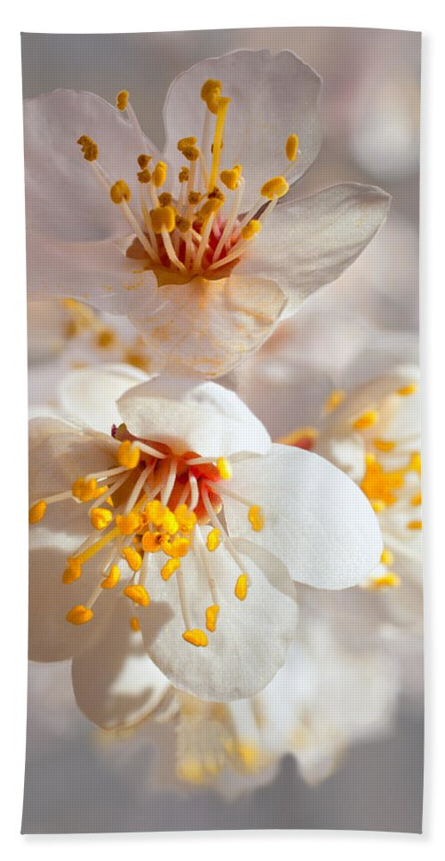Apricot Hand Towel featuring the photograph Apricot Blooms by Diana Powell