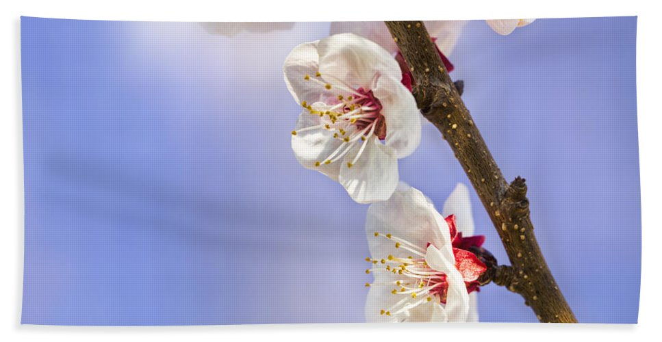Apricot Hand Towel featuring the photograph Apricot Flowers by Marc Garrido