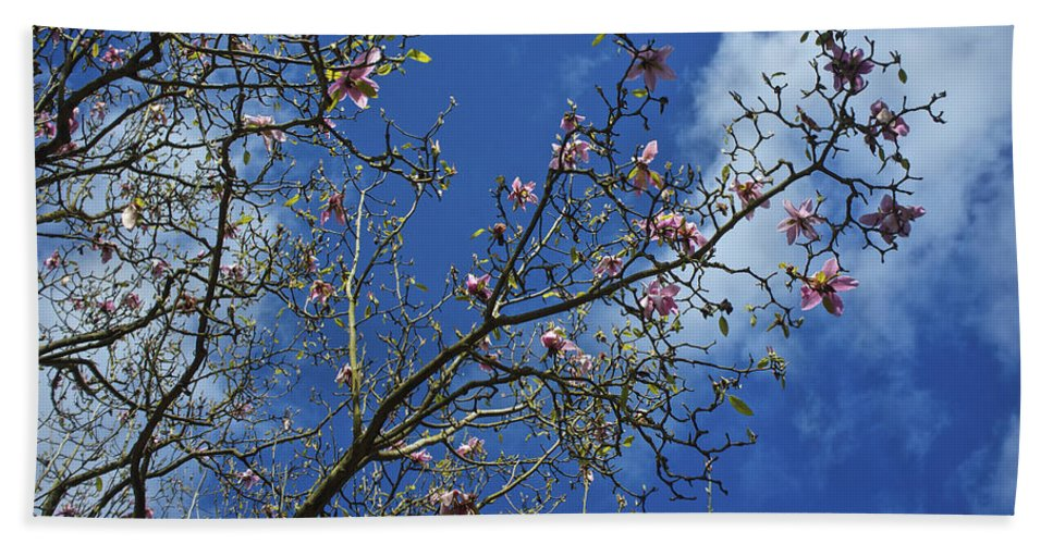 Uk Bath Sheet featuring the photograph April Blossom by Christopher Rees