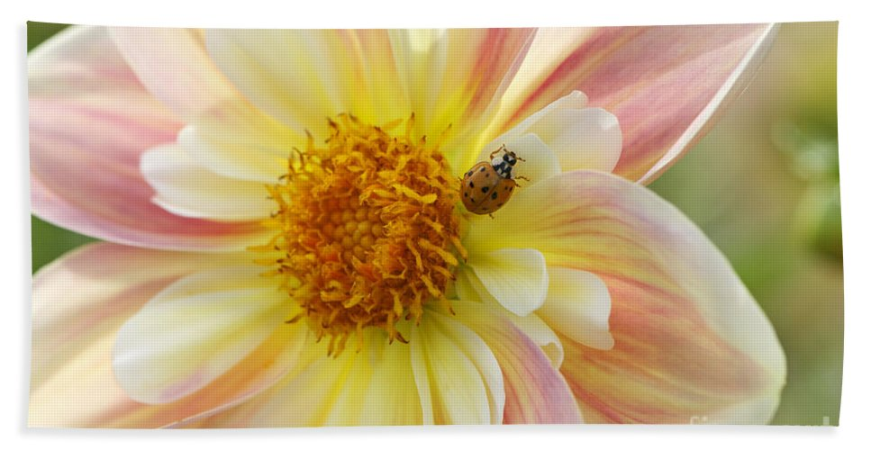 April Heather Bath Sheet featuring the photograph April Heather Dahlia With Ladybug by Sharon Talson