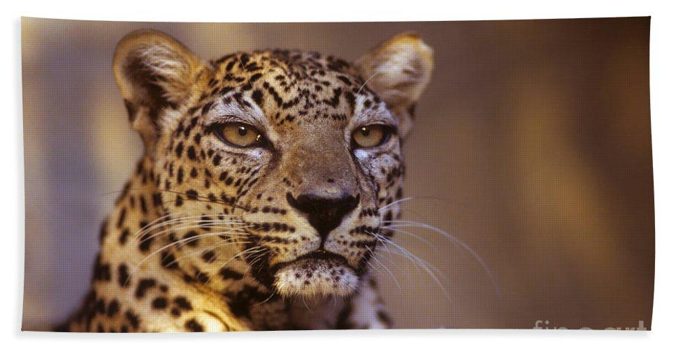 Arabian Leopard Hand Towel featuring the photograph Arabian Leopard Panthera Pardus 1 by Eyal Bartov