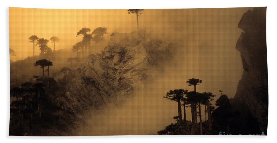 Chile Hand Towel featuring the photograph Araucaria Dawn Chile by James Brunker