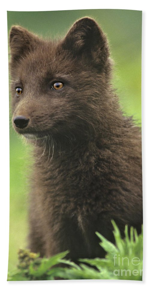 North America Bath Towel featuring the photograph Arctic Fox Portrait Alaska Wildlife by Dave Welling