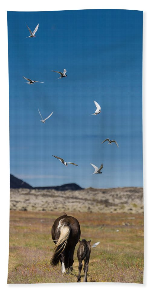 Photography Hand Towel featuring the photograph Arctic Terns With Mare And Foal by Panoramic Images