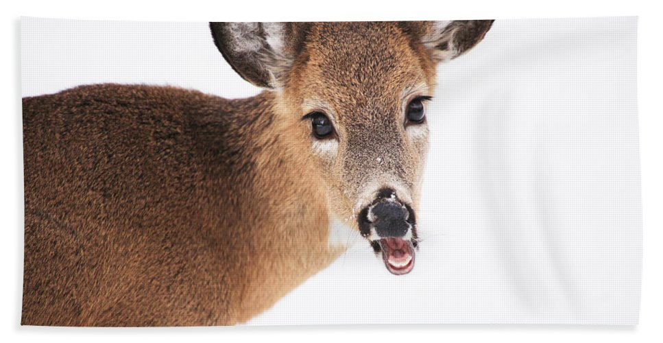 Deer Hand Towel featuring the photograph Are You Done Taking Pictures by Karol Livote