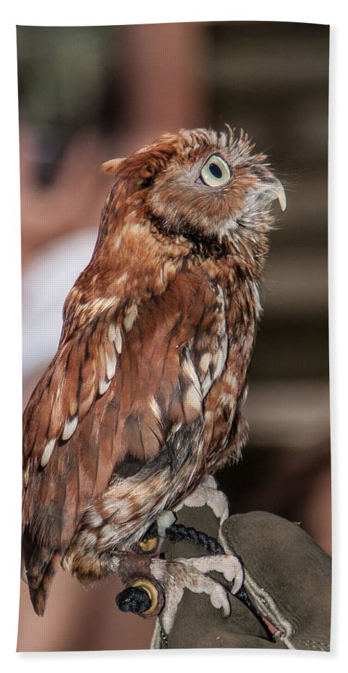 Screech Owl Bath Sheet featuring the photograph Are You My Mother by John Haldane