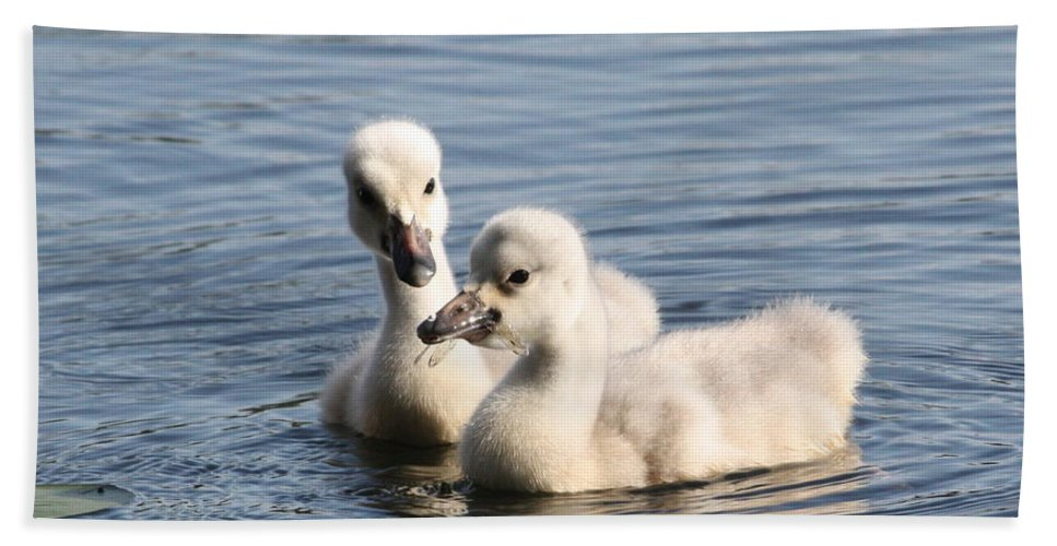 Trumpeter Swan Hand Towel featuring the photograph Aren't You Going To Share? by Teresa McGill