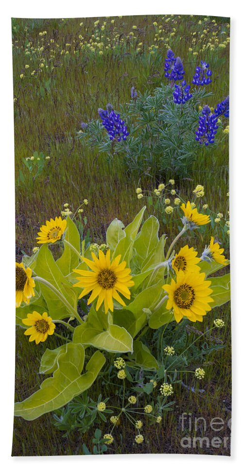 Nature Hand Towel featuring the photograph Arrowleaf Balsamroot And Lupine by John Shaw