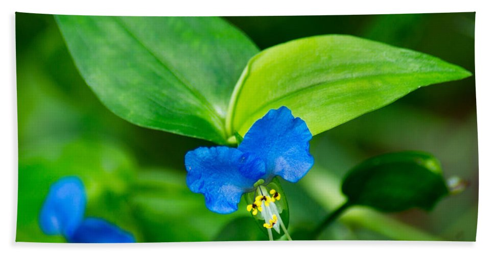 Wildflower Bath Sheet featuring the photograph Asiatic Dayflower by Bill Pevlor