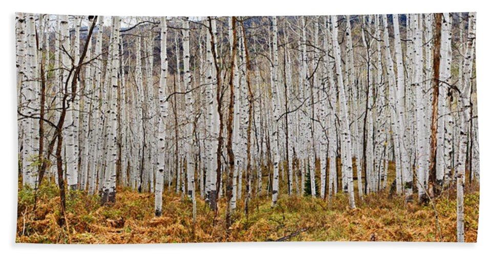 Colorado Photographs Bath Sheet featuring the photograph Aspen And Ferns by Gary Benson