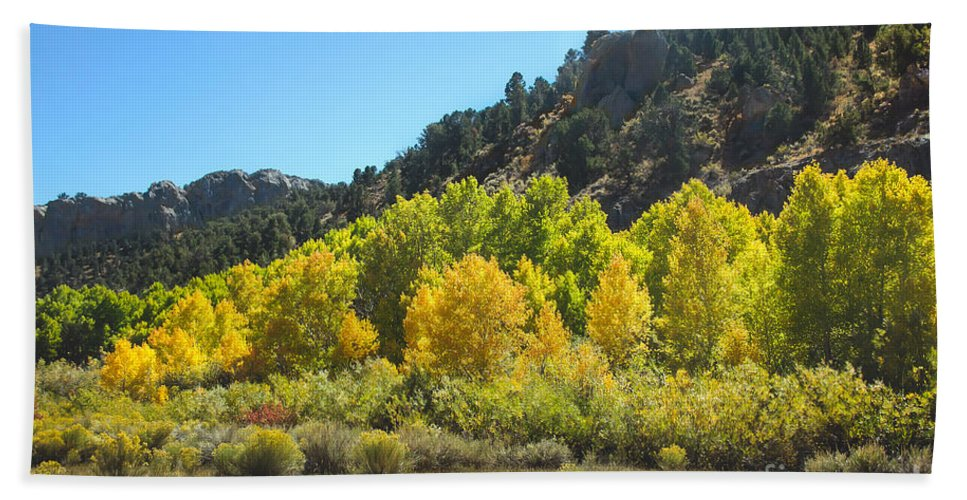 Fall Color Hand Towel featuring the photograph Aspen Grove In The Fall by Robert Bales