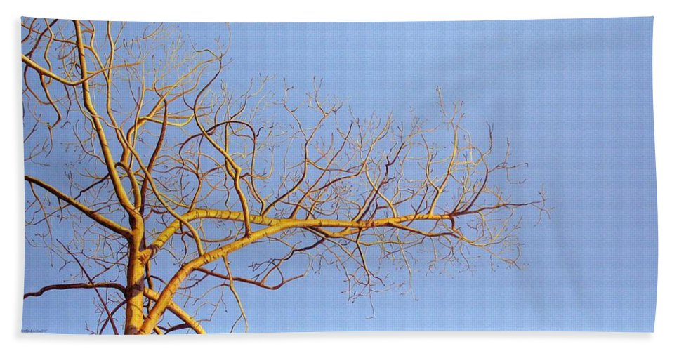 Aspen Painting Hand Towel featuring the painting Aspen In The Autumn Sun by Elaine Booth-Kallweit