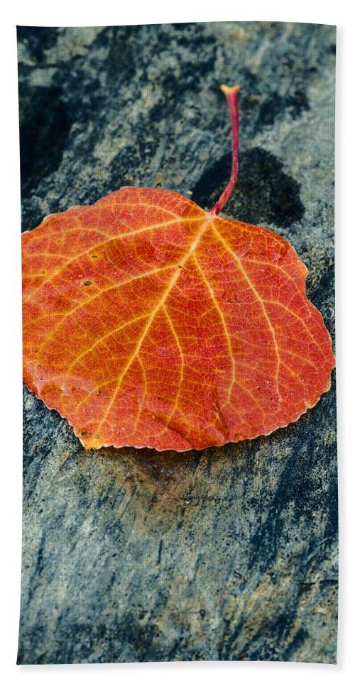 Aspen Leaf Hand Towel featuring the photograph Aspen Leaf by Vishwanath Bhat