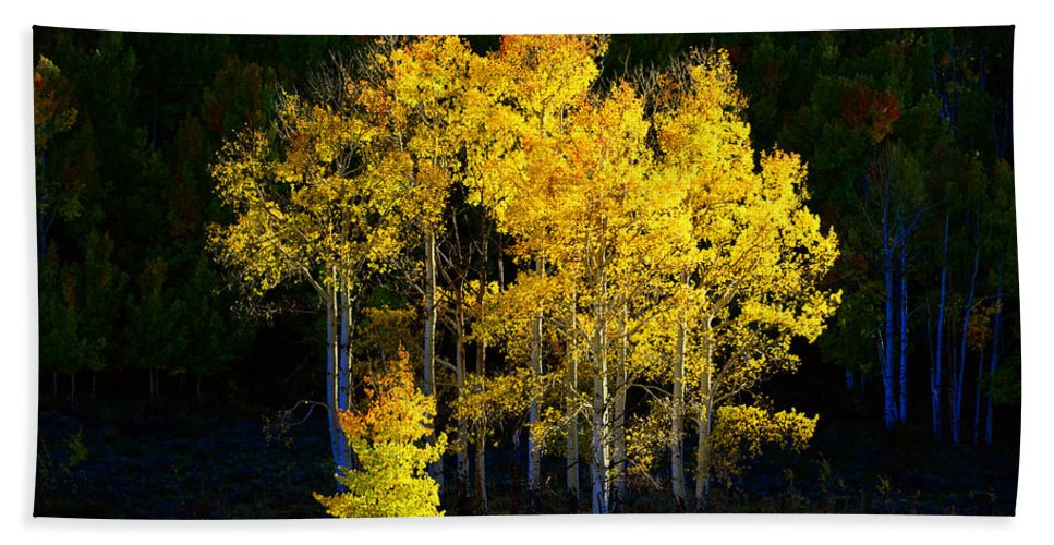 Fall Bath Sheet featuring the photograph Aspen Stand by David Lee Thompson
