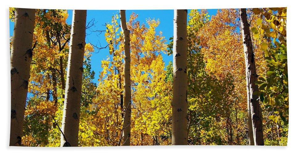 Aspen Bath Sheet featuring the photograph Aspen Trees In Fall by Amy McDaniel