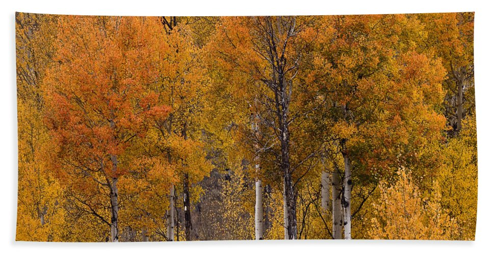 Aspens Ablaze Bath Sheet featuring the photograph Aspens Ablaze by Wes and Dotty Weber