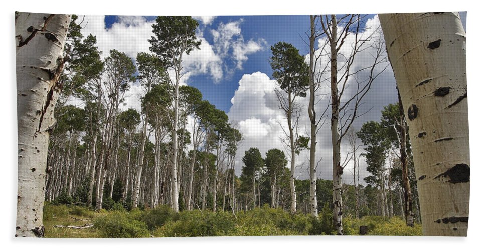 3scape Hand Towel featuring the photograph Aspen Grove by Adam Romanowicz