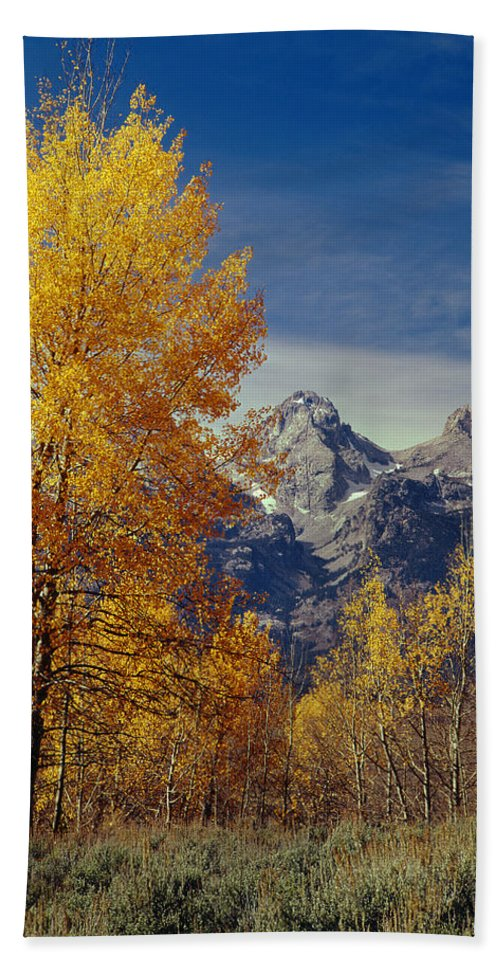 Aspens Bath Sheet featuring the photograph 1m9353-aspens In Autumn And The Teton Range - V by Ed Cooper Photography